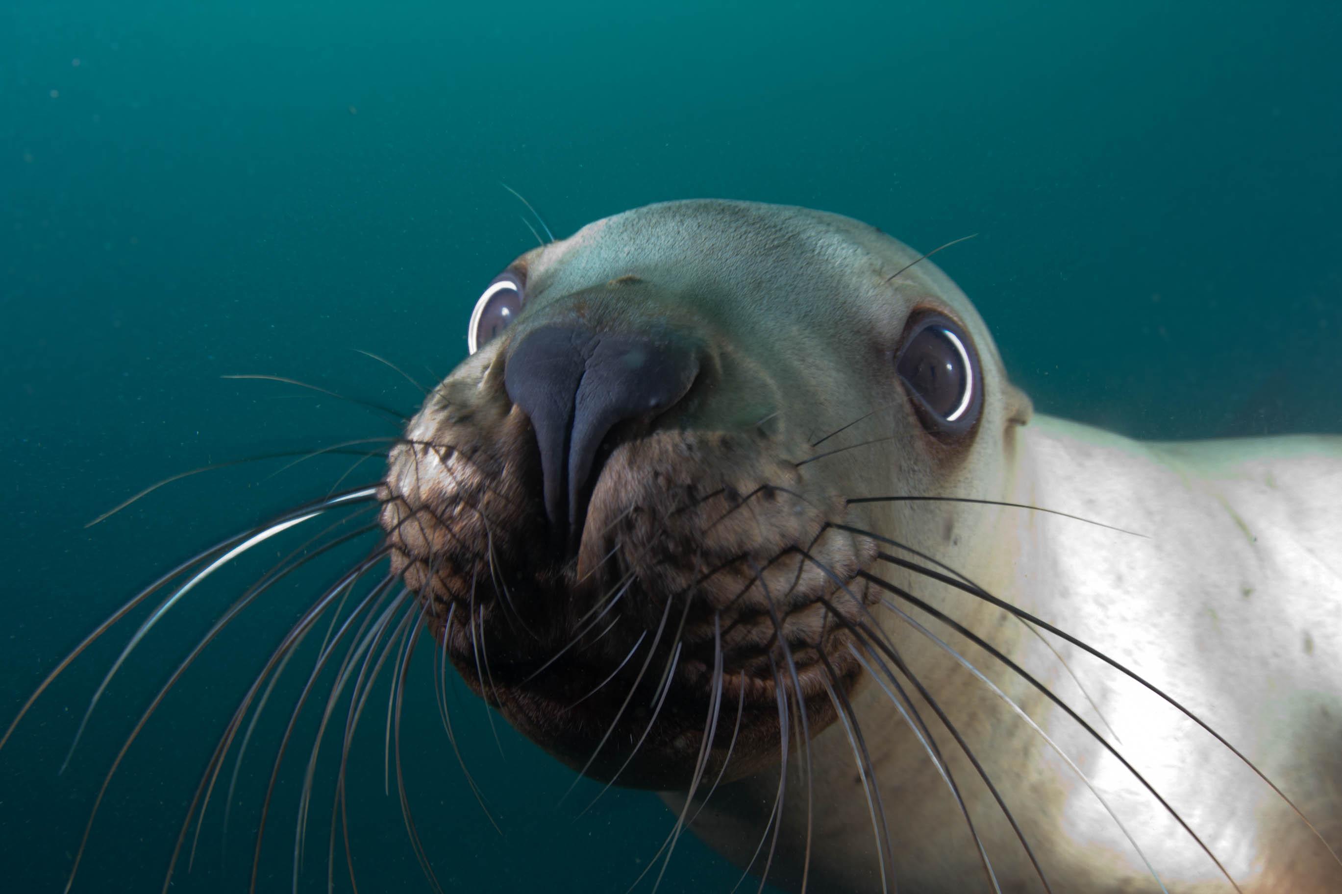 pixar-sea-lion
