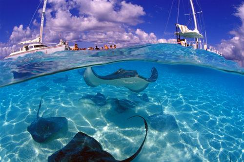 Grand Cayman @ Cayman Island   George Town   George Town   Cayman Islands