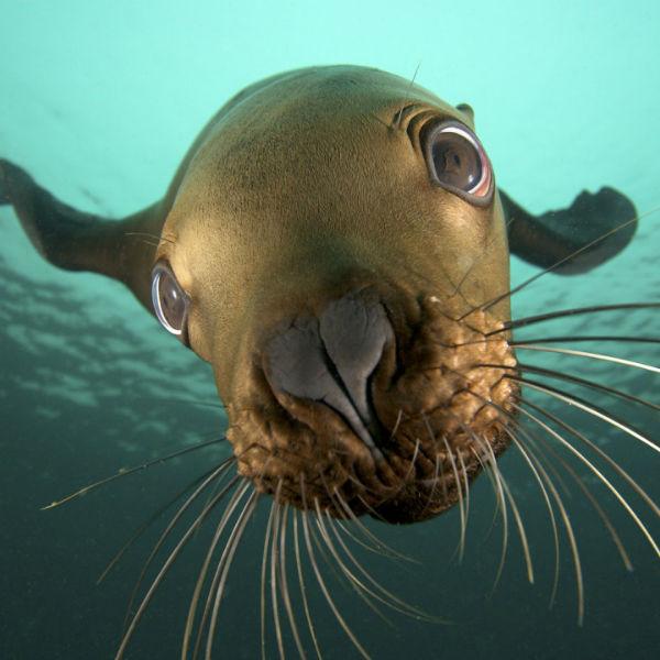 Sea Lions @ Vivian Island | British Columbia | Canada
