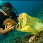 underwater_cleanup (1)