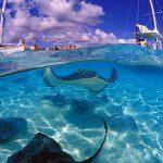 Cayman Island Stingray Underwater