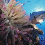 Cayman Island Anemone