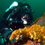 COMOX-SCUBA-DIVING-TRIP-FROM-VANCOUVER