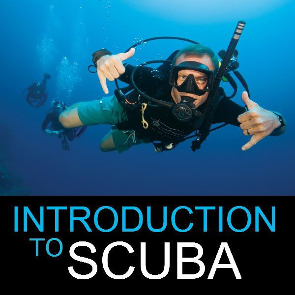 Intro To Scuba Diving – Course (Vancouver)